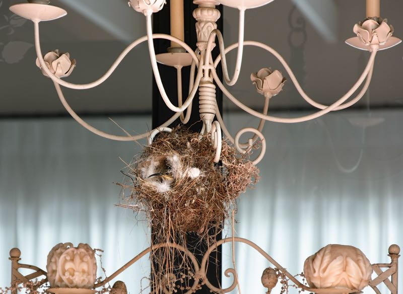 Malachite Sunbird nesting in a chandelier